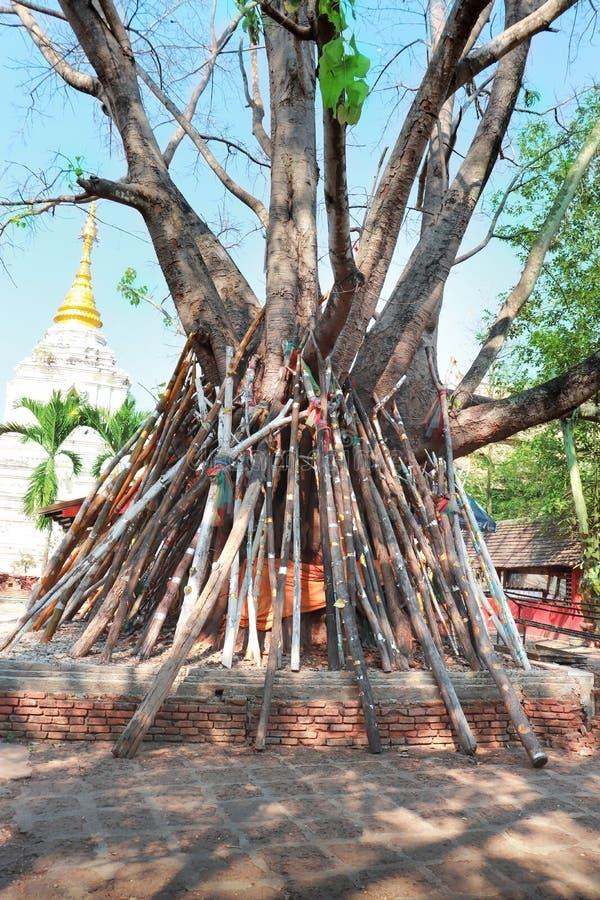 Gamla det träd- och stöttastaget träd håller att falla royaltyfri fotografi