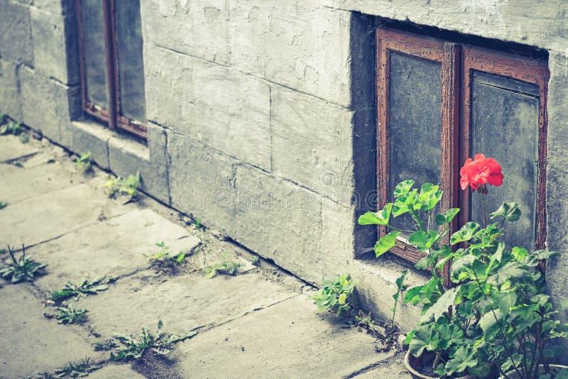 Gamla fönster- och blomkrukapelargon i Tuscany, Italien Gammalt fönster med blommor Fallfärdiga fönster med brutet exponeringsgla arkivbild