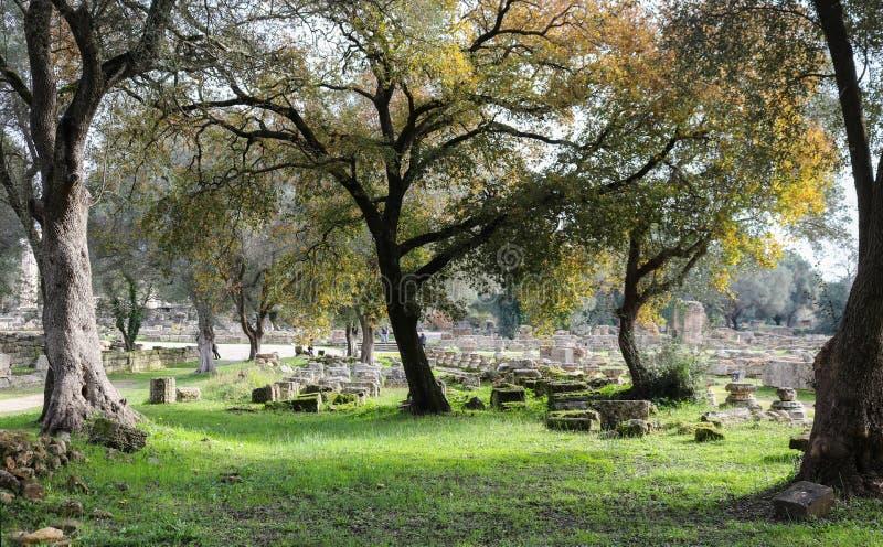 Gamla knotiga träd inramar fördärvar av forntida Olympia med pelare, och kvarter som är ordnade i täckt mossa, ror med banor för  arkivfoton