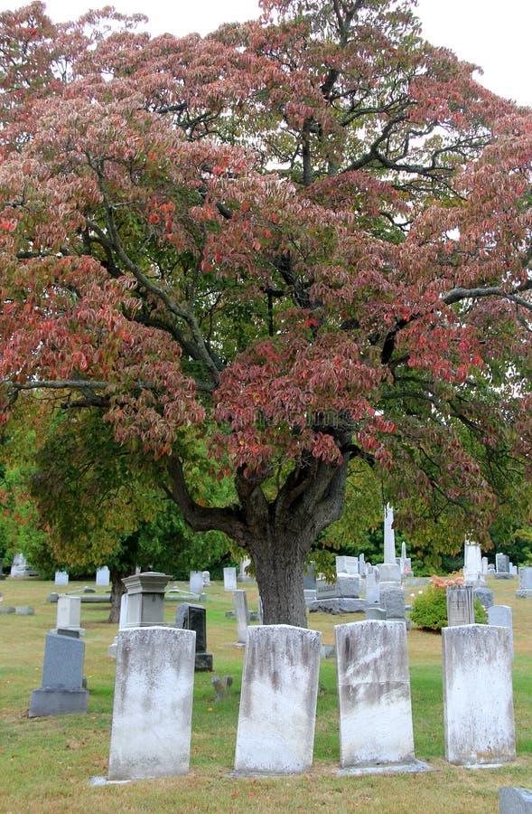 Gamla red ut gravstenar i kyrkogård med skugga av nedgången förgrena sig på träd royaltyfria foton