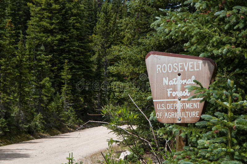Gamla Roosevelt National Forest Sign royaltyfri fotografi