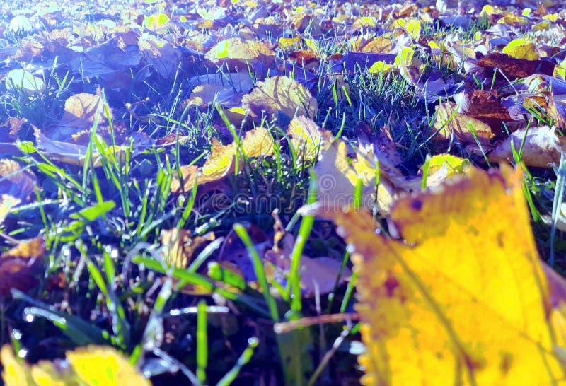 Gamla Tone Autumn Leaves på jordningen royaltyfria bilder
