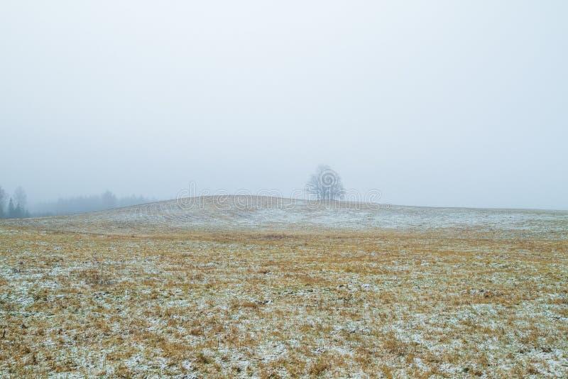 Gamla träd i äng smog Vinter Lettland 2011 royaltyfri foto