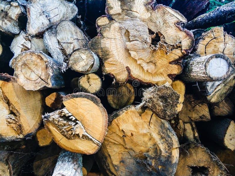 gamla träjournaler sågade Texturen av tr?t royaltyfria foton