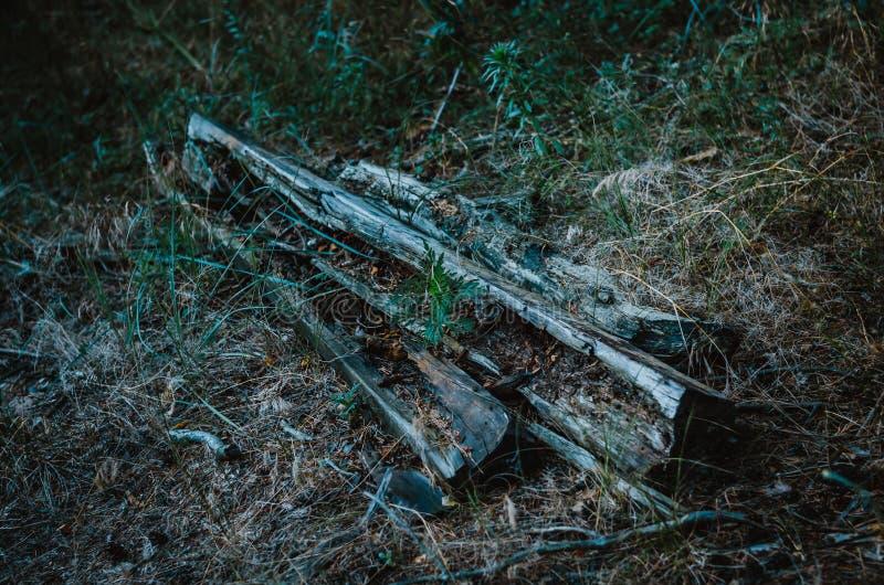 Gamla trälängsgående stödbjälke på jordningen Ruttna journaler och stänger i mitt av lågt gräs bakgrundsdark - green Afton f?r se arkivfoto