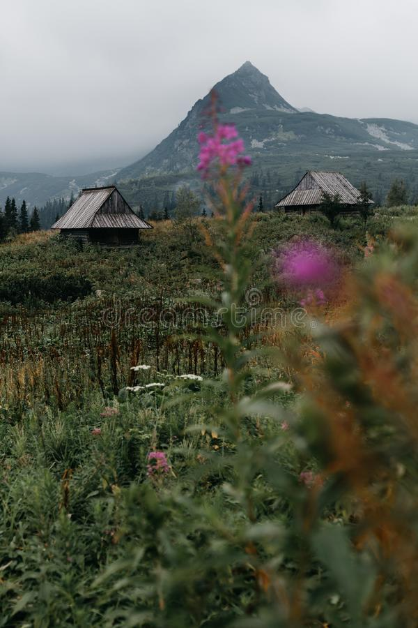 Gamla trälantliga bergkojor i de Tatra bergen med det monumentala bergmaximumet i bakgrunden royaltyfri fotografi