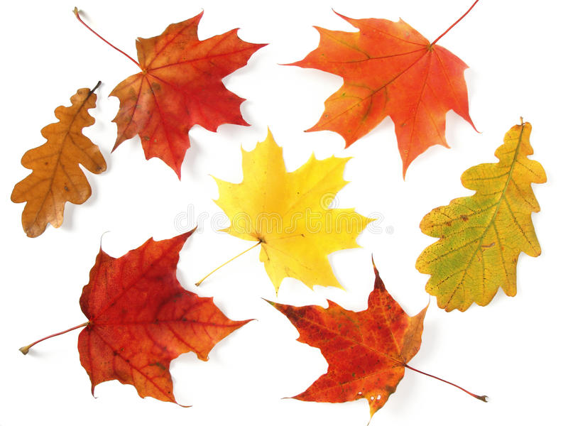gamma di colori d'autunno fotografie stock