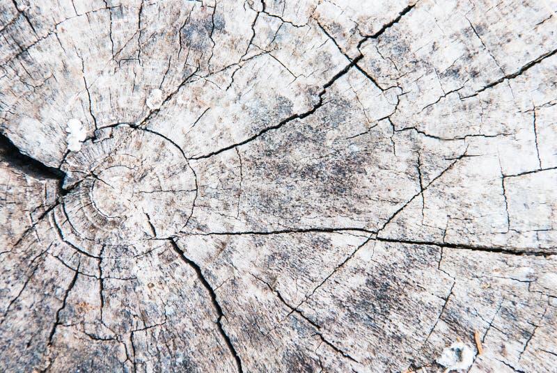 Gammal åldrig stubbe för bakgrund royaltyfri bild