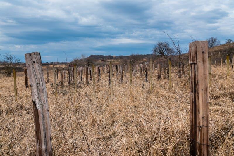 Gammal övergiven vingård med torrt gräs och träpelare royaltyfri fotografi