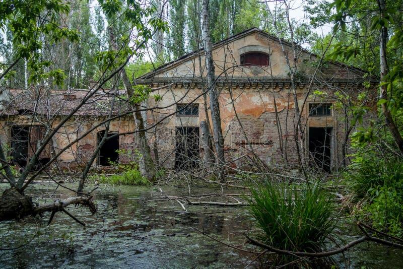 Gammal översvämmad bevuxen förstörd övergiven lämnad kvar industribyggnad bland myren efter flodkatastrofen fotografering för bildbyråer