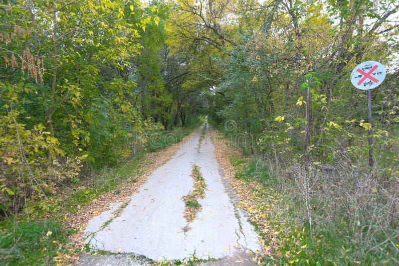 Gammal asfalterad lantlig väg längs skogen fotografering för bildbyråer