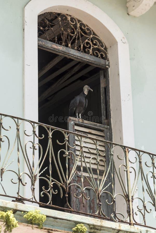 Gammal balkong och dörr med en kadaverfågel i den gamla staden av Panama royaltyfria foton