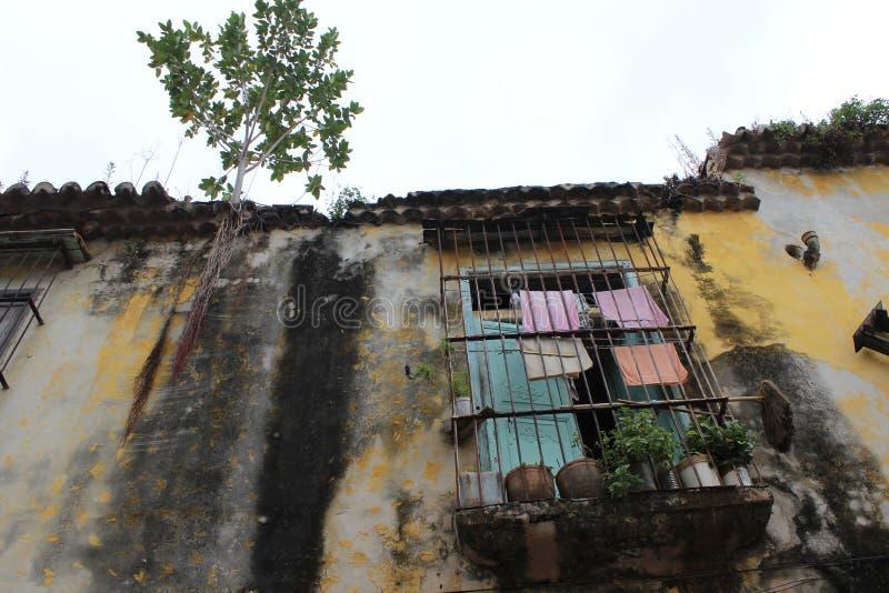 Gammal balkong och trädet som växer på taket av ett hus royaltyfri bild