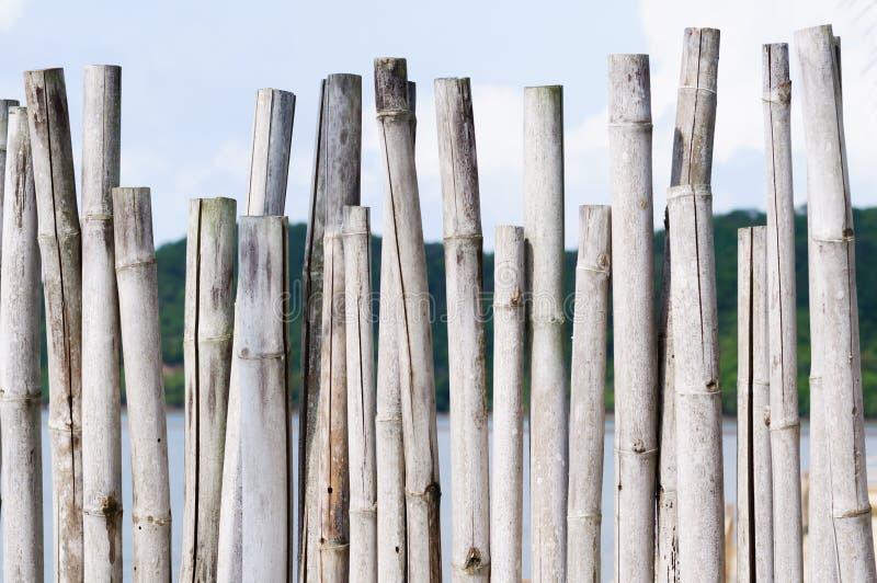 Gammal bambu arkivfoton