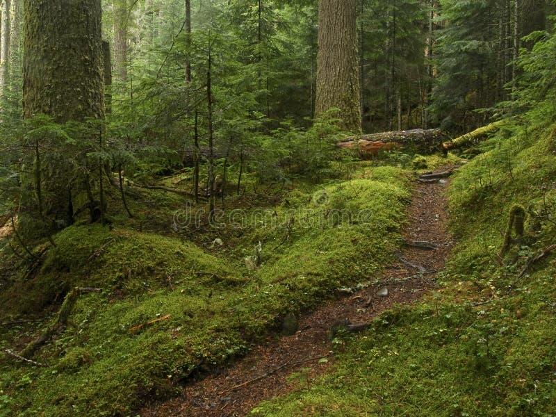 gammal bana för skogtillväxt royaltyfria foton