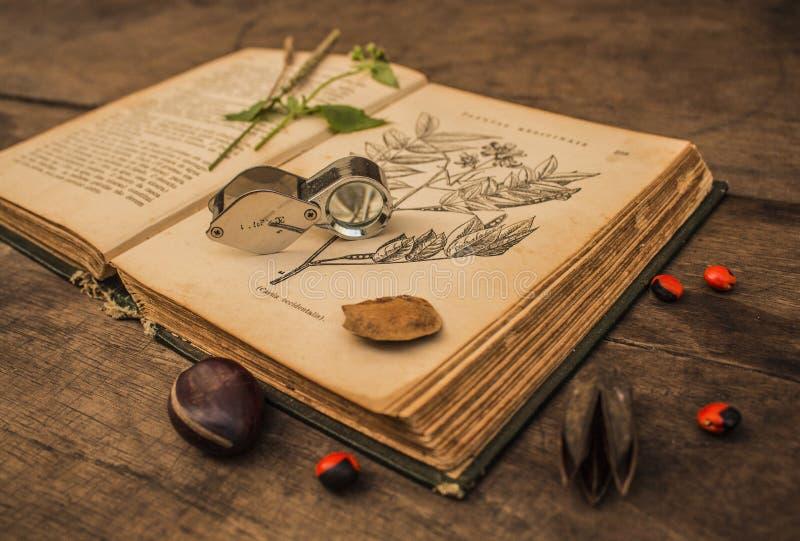 Gammal botanisk bok fotografering för bildbyråer