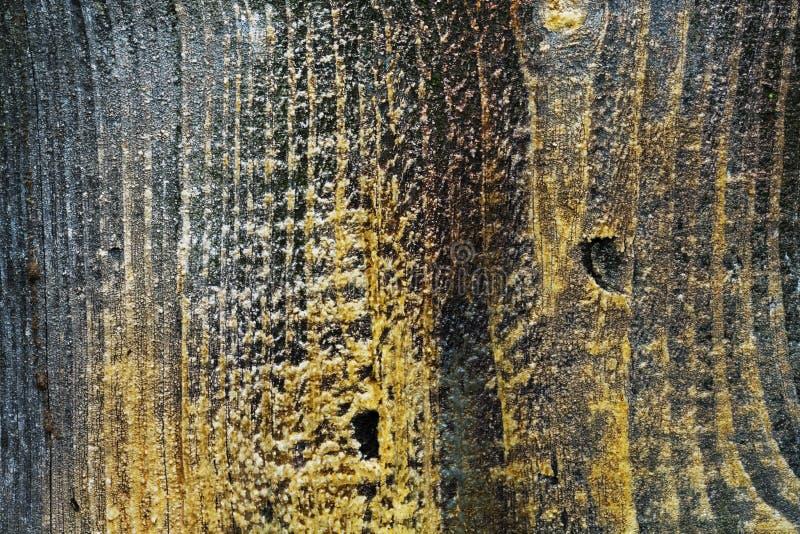 Gammal brun trätextur, mjuk fokus royaltyfri foto