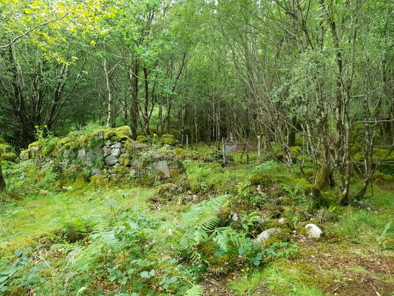 Gammal bulding montering för skog, natur royaltyfri fotografi