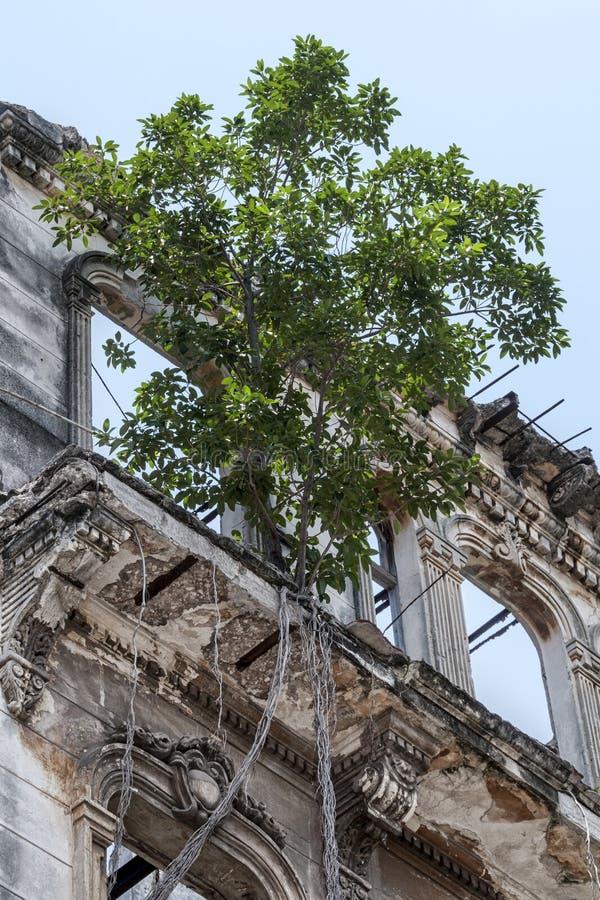 Gammal byggnad som förstörs vid tid med trädet på balkong fotografering för bildbyråer