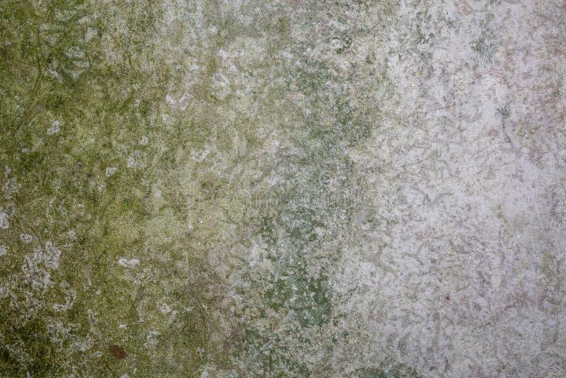 Gammal cementvägg med den gröna formen och smuts, textur av åldrig konkret yttersida royaltyfri foto