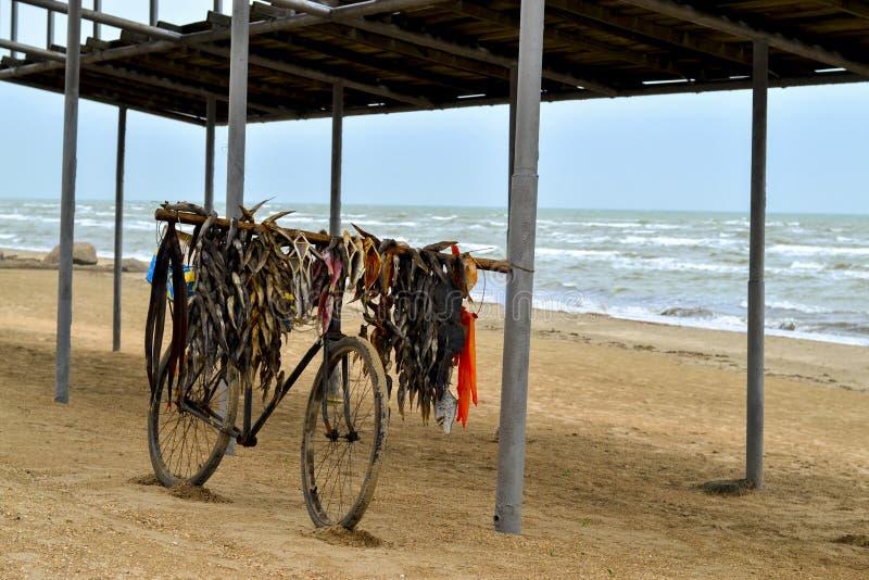 Gammal cykel fiskhandlaren på sjösidan arkivbilder