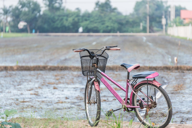 Gammal cykel i Paddy Field fotografering för bildbyråer