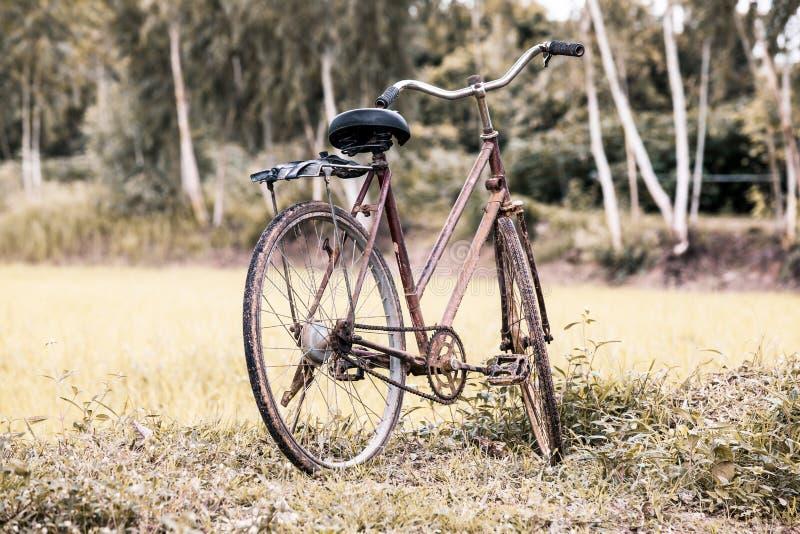 Gammal cykel i risfältet arkivbilder