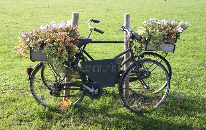 Download Gammal cykel med blommor fotografering för bildbyråer. Bild av petunia - 27283825