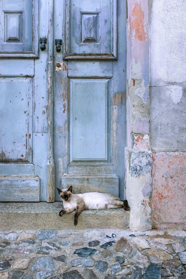 Gammal dörr med katten arkivfoton
