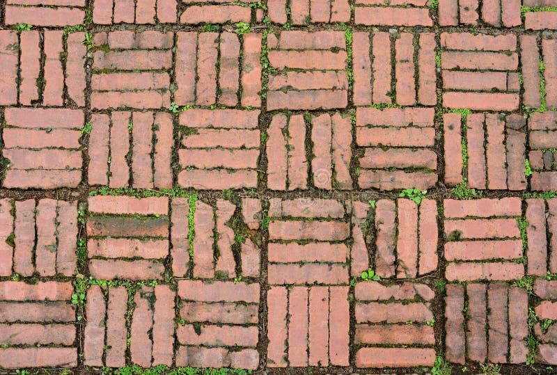 Gammal för trottoarmodell för röd tegelsten textur för bakgrund med mossa och det lilla mellanlägget för grön växt mellan utrymme royaltyfria bilder
