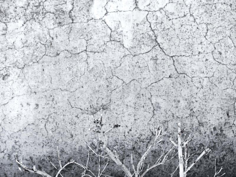 gammal försämras cementvägg royaltyfri bild