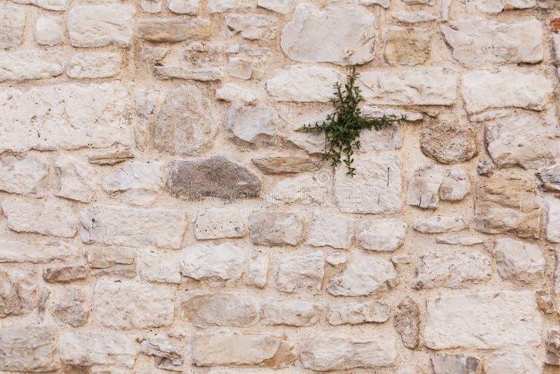 Gammal forntida textur för grunge för tegelstenvägg fotografering för bildbyråer