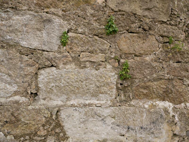 Gammal grov textur för tappningstenvägg med växter som växer i sprickor royaltyfri foto