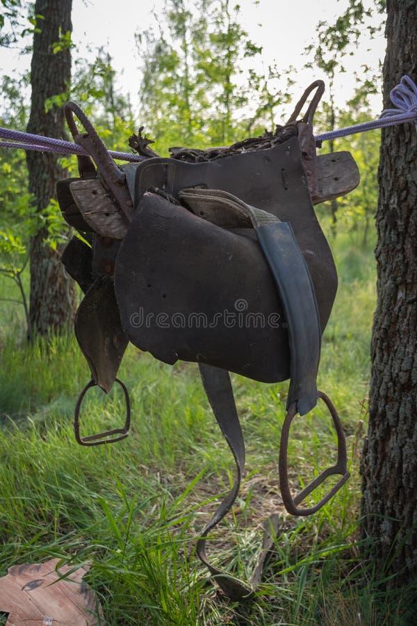 Gammal hästsadel som hänger på ett rep i en skog mellan trädet Cowboyparti royaltyfri fotografi