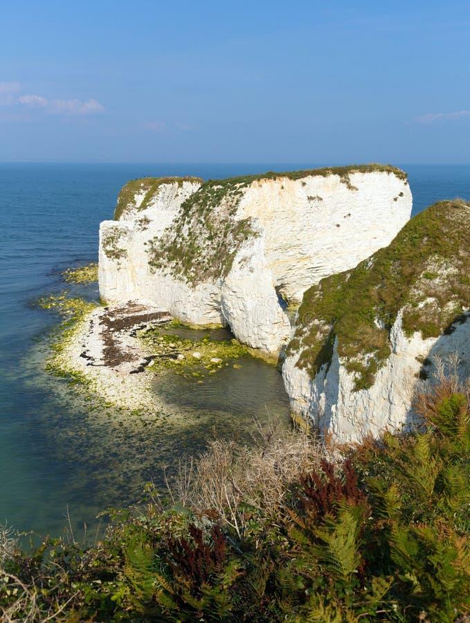 Gammal Harry Rocks Studland för kritaklippor kust i Dorset södra England UK arkivfoto