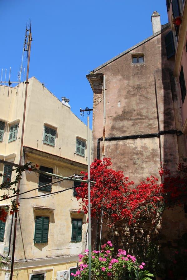 Gammal historisk byggnad med att blomma rosa blommor royaltyfri bild