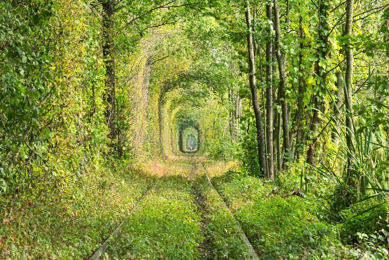 Gammal järnväg linje Mycket länge skapar tunnelen av träd en ovanlig gränd Tunnel av förälskelse - underbart ställe som av nature arkivfoto