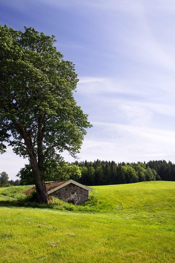 Gammal jordkällare i ett grönt fält med ett älskvärt träd bredvid det arkivbilder