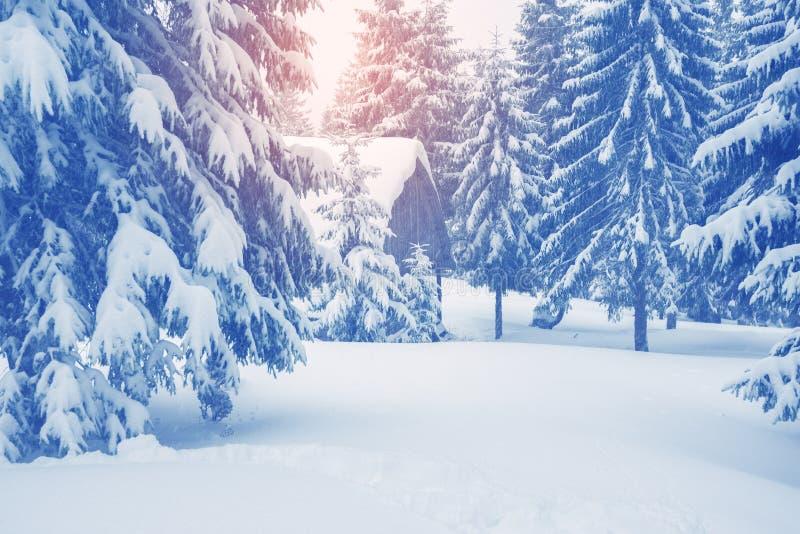 Gammal journalkabin, skydd som täckas med snö fotografering för bildbyråer