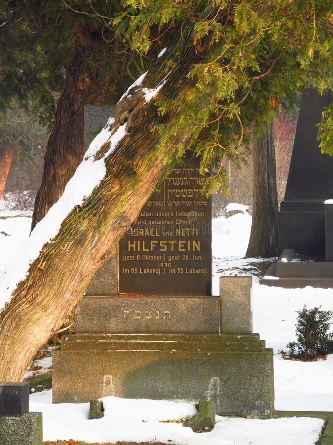 Gammal judisk grav under trädet arkivfoton
