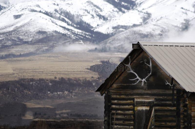 Gammal kabin med snöberg och älgkronor arkivfoto