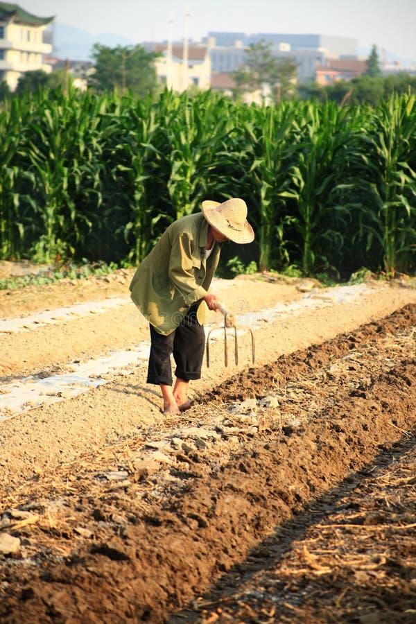 Download Gammal kinesisk bonde arkivfoto. Bild av produce, utomhus - 19777644