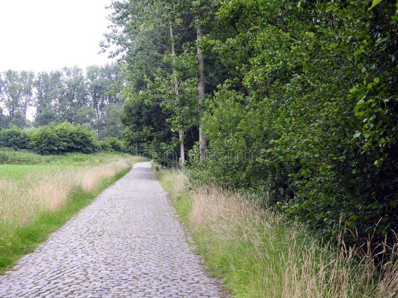 Gammal kullerstenväg i skog arkivbilder