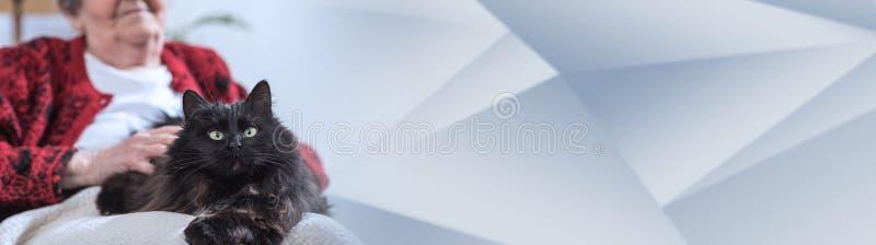 Gammal kvinna med hennes katt panorama- baner arkivfoton