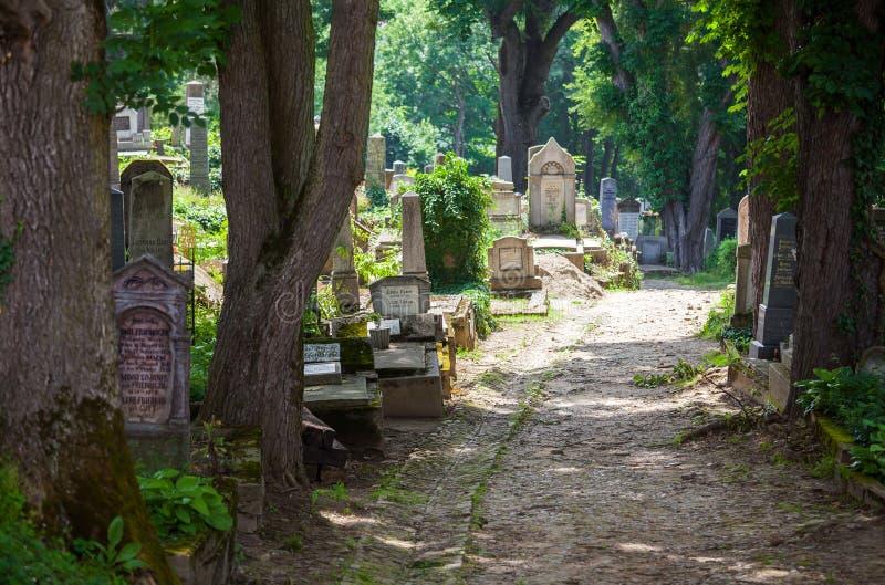 Gammal kyrkogårdskog arkivfoton