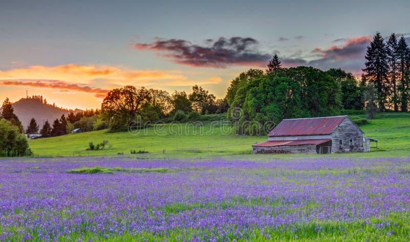 Gammal ladugård i den Willamette dalen royaltyfri fotografi