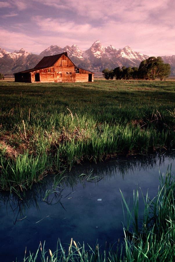 Gammal ladugårdantilop sänker den storslagna Tetons Wyoming lodlinjen arkivbilder