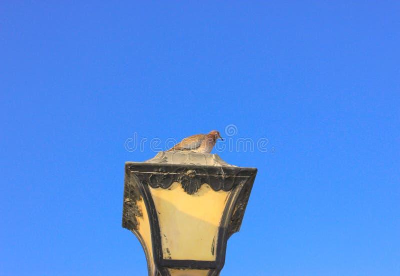 Gammal lampa och duva för tappningmetallgata royaltyfria bilder