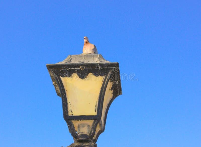 Gammal lampa och fågel för tappningmetallgata arkivfoton