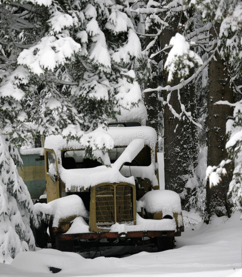 gammal lastbil för skog royaltyfri fotografi